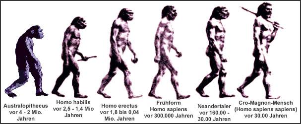 Vorfahren Des Menschen