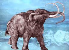 classic style free shipping latest Mammut einfach erklärt