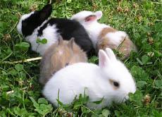 ein kaninchen als haustier was gibt es beachten. Black Bedroom Furniture Sets. Home Design Ideas