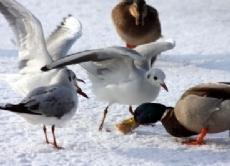 Vogel Im Winter Wie Uberleben Sie Und Wann Sollten Wir Sie Futtern