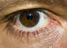 Das Auge Warum Können Wir Dinge Sehen