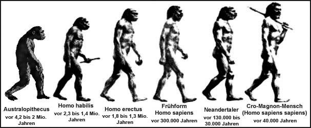 https://www.helles-koepfchen.de/bilder/originale/wissen/unsere_umwelt/evolution_grafik.jpg