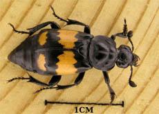insekten merkmale und nutzen der wichtigen tiere. Black Bedroom Furniture Sets. Home Design Ideas