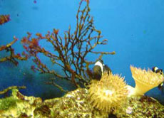Korallenriffe Referat
